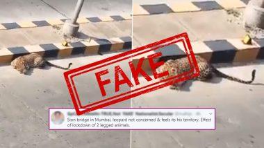 Fact Check: मुंबईत सायन ब्रिज किंवा जेव्हीएलआर जवळ बिबट्या आढळला? जाणून घ्या रवीना टंडनने शेअर केलेल्या या व्हायरल व्हिडिओ मागील सत्य