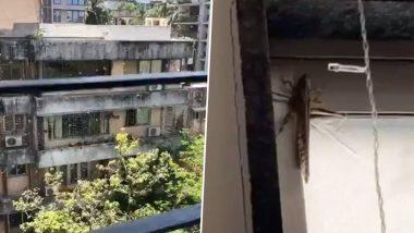 Locusts Seen in Mumbai?: मुंबई शहरातही टोळधाड दाखल? जुहू, विक्रोळीसह अनेक ठिकाणी टोळ दिसल्याचा दावा; फोटो सोशल मीडियावर व्हायरल