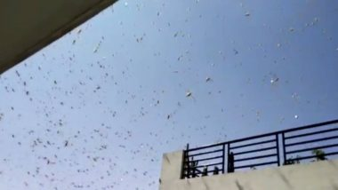 Locusts Seen in Mumbai?: मुंबईला टोळधाडीचा धोका नाही; व्हायरल होत आहेत फेक फोटो व व्हिडिओ, BMC ने दिले स्पष्टीकरण