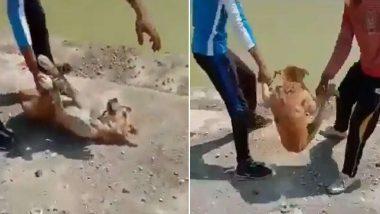 TikTok Video साठी कुत्र्याला पाण्यात फेकणाऱ्या तरुणांना शोधण्यासाठी PETA तर्फे 50 हजाराचे बक्षीस जाहीर, पहा व्हिडीओ