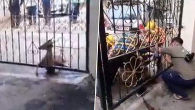 Thane: घोडबंदर रोड येथील सोसायटीच्या गेट मध्ये अडकून पडलेली दोन हरणं बाहेर काढण्यासाठी वनविभागाचे अथक प्रयत्न (Watch Video)