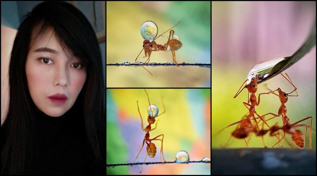 Mobile Photography: क्रेडिट गोज टू 'मुंग्या पाणी कसं पितात'; Analiza Daran De Guzman या Filipino Photographer  महिलेने जिंकली International Contest