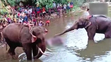 Pregnant Elephant Dies Update: पलक्कड मध्ये गर्भवती हत्तीणीच्या मृत्यू प्रकरणी एकाला अटक, वनमंत्री के राजू यांनी दिली माहिती