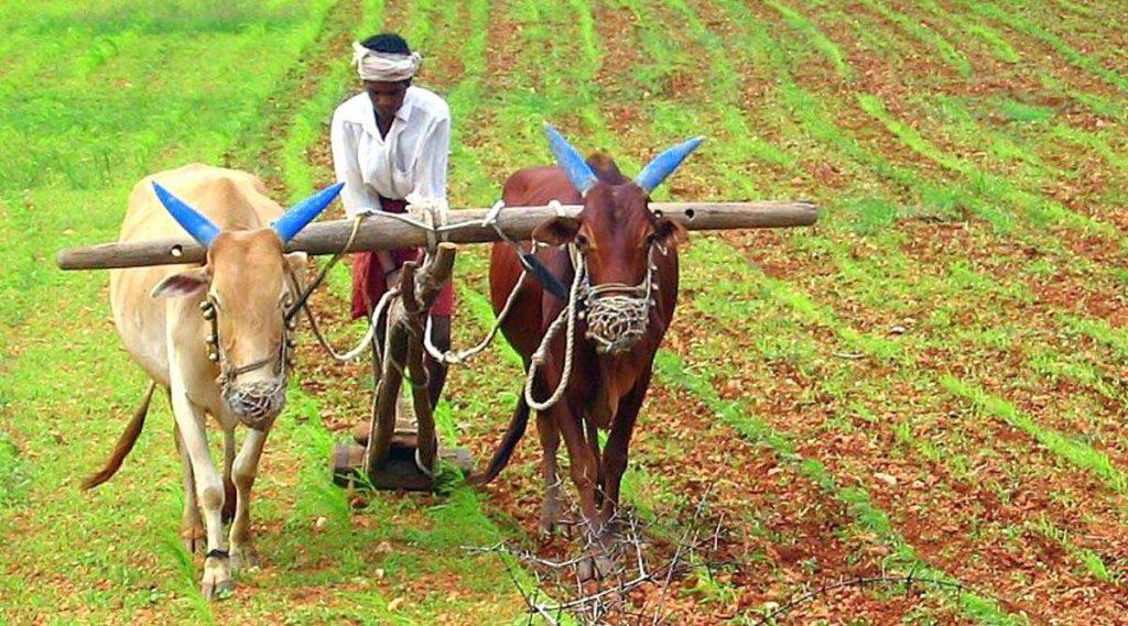 Bendur 2020: कोल्हापूर मध्ये आज कर्नाटकी बेंदूर; यंदा महाराष्ट्रात बैलपोळा आणि बेंदूर कधी साजरा होणार आणि त्याचे महत्व काय?