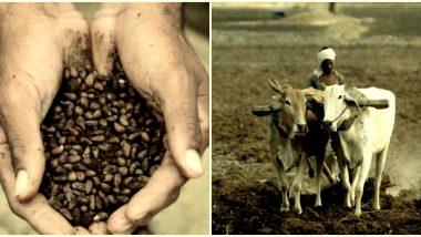 Kharif Crop Season 2020: शेतकऱ्यांनो लाभ घ्या! खते, बी-बियाणे बांधावर पुरविण्यासाठी 47 हजार 89 शेतकरी गट तयार, सरकारने कापूस बियाणे पाकिटेही बांधावर पोहोचविली