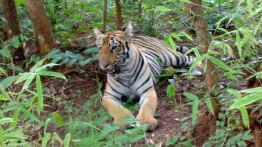 Tillari Conservation Reserve Area: सिंधुदुर्ग जिल्ह्यातील तिलारी परिसर 'संवर्धन राखीव क्षेत्र' म्हणून घोषित
