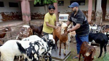 Bakri Eid 2020: बकरी ईद निमित्त का दिली जाते कुर्बानी? जाणून घ्या Eid-ul-Adha चे महत्त्व