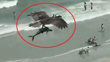 शार्क मासा चोचीत पकडून पक्षी समुद्रातून उडाला आकाशी, किनाऱ्यावरचे लोक बघतच राहिले, पाहा Viral Video