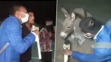 पत्रकाराने घेतली गाढवाची मुलाखत; कोविड-19 संकटात मास्क न घालता फिरणाऱ्यांना दिला मौल्यवान संदेश (Watch Video)
