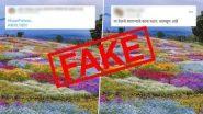 Fact Check: फुलांनी सजलेल्या कास पठाराचे फोटोज सोशल मीडियावर व्हायरल; जाणून घ्या फोटो मागील सत्य