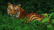 Gondia: गोंदिया जिल्ह्यात मालवाहू ट्रेनची धडक बसल्याने एका वाघाचा मृत्यू; मृतदेह पोस्टमार्टमसाठी पाठविला