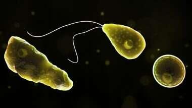 Brain Eating Amoeba: अमेरिकेतील फ्लोरिडा मध्ये मानवी मेंदूचा नाश करणाऱ्या अमीबाचे नवीन प्रकरण; जाणून घ्या Naegleria Fowleri या गंभीर आजाराविषयी सविस्तर