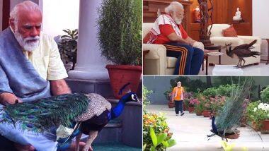PM Narendra Modi Tweet: पंतप्रधान नरेंद्र मोदी यांच्या घरी आला सुंंदर पाहुणा, ट्विट करुन शेअर केला नयनरम्य व्हिडिओ