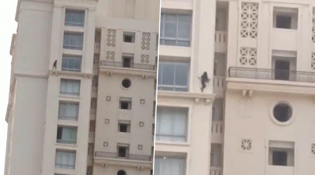 Girl Walking on Building's Outer Wall Video: सोशल मीडियात व्हायरल होणारा 'Hiranandani Estate'मधील व्हिडिओ ठाण्याचा नसून चैन्नईमधील जुना व्हिडीओ; ठाणे पोलिसांची माहिती