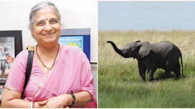 Elephant Calf Names Sudha Murthy: मादी हत्तीचे नाव ठेवले सुधा मूर्ती, बंगळुरु येथील प्राणिसंग्रहालयाचा निर्णय