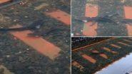 Fish On Railway Track: परळ स्थानकावर साचलेल्या पाण्यात आढळले मासे