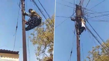 Watch Video: ग्राहकांना अखंडीत वीज पुरविण्यासाठी चक्क विद्युत खांबावर चढणाऱ्या उषा जगदाळे यांचा व्हिडिओ व्हायरल