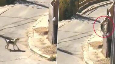 Monday Motivation: उंच भिंतीवर चढण्यासाठी कुत्र्याचे चाललेले अथक प्रयत्न आणि त्यातून मिळालेले यश पाहून अपयशाने खचून न जाण्याचा मूलमंत्र देणारा हा Viral Video एकदा नक्की पाहा
