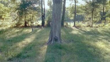 Martha Chapel Cemetery: टेक्सासच्या शापित अशा 'मार्था चॅपल कब्रस्तान'मध्ये मुलीचे भूत? Google Maps Street View मध्ये दिसली रहस्यमय आकृती (Watch Video)