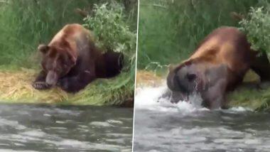 Hungry Bear: नदीकिनारी बसलेल्या अस्वलाने अत्यंत चतुराईने केली माशाची शिकार; पहा व्हायरल व्हिडिओ
