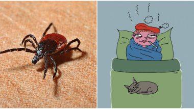CCHF: Crimean Congo Fever उत्पत्ती, आजार, लक्षणे आणि सुरक्षीतता