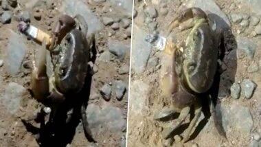 Crab Smoking Cigarette: सिगरेट च्या पाकीटावर धुम्रपानाने कॅन्सर होण्याचा सल्ला देणारा खेकडाच स्वतः दिसला स्मोकिंग करताना, Watch Video Viral