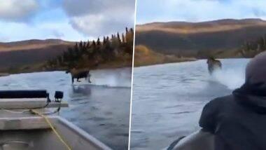 Viral Video: नदीच्या प्रवाहात वा-याच्या वेगासारखा धावणारा Moose प्राणी पाहून नेटिझन्स झाले हैराण; पाहा अचंबित करणारा व्हिडिओ