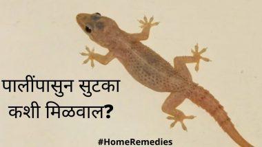 How To Get Rid Of Lizards: घरात पाली धुमाकुळ घालतायत ? 'हे' सोप्पे उपाय करुन आजच मिळवा या त्रासातुन सुटका