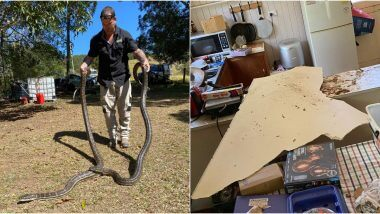 Snake Love Triangle: मादी वरून भिडलेल्या दोन अजस्त्र अजगरांच्या मस्तीमुळे ऑस्ट्रेलियात घरामध्ये कोसळले सिलिंग (See Pictures)