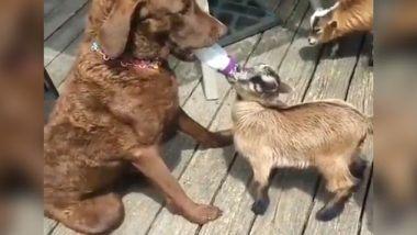 Viral Video: कुत्र्याने बकरीच्या पिल्लाला बाटलीने पाजले दूध; पहा व्हिडिओ