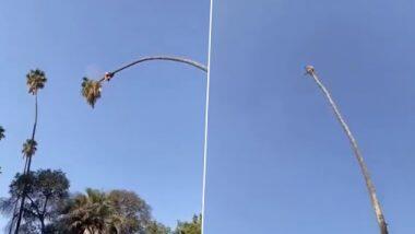 Viral Video: ताडाच्या झाडावर बसून कापत होता झाडाचा शेंडा, नेटीकरी म्हणाले हे तर 'रिव्हर्स बंजी जंपिंगपेक्षाही भीतीदायक'; पहा काळजाचा ठोका चुकवणारा व्हिडिओ