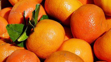 महाराष्ट्र: अतिवृष्टीमुळे संत्र्यांचे भाव कोसळले, बागायतदारांचे प्रचंड प्रमाणात नुकसान