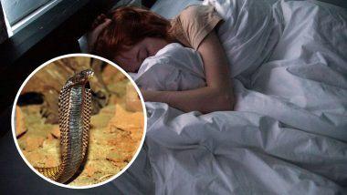 Snakes in Dreams : तुम्हाला स्वप्नात साप दिसतो का?स्वप्नात साप दिसण्याचा काय अर्थ आहे ? जाणून घ्या अधिक सविस्तर