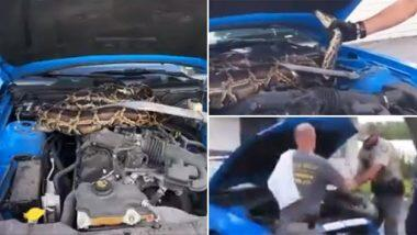 Florida: वन्यजीव अधिकाऱ्यांनी कारच्या इंजिनमधून केली 10 फूट लांबीच्या अजगराची सुटका; पहा व्हायरल व्हिडिओ