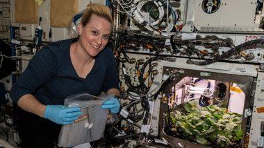 NASA च्या अंतराळवीरांचे मोठे यश; पहिल्यांदाच International Space Station मध्ये उगवण्यात आला 'मुळा' (Watch Video)