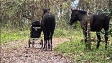 Viral Video: जंगली घोड्यांनी चोरले Baby Stroller; फ्लोरिडामधील विचित्र घटनेचा व्हिडिओ सोशल मीडियावर व्हायरल