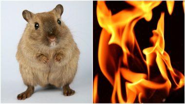 Solapur : देवासमोरचा दिवा उंदराने पळवला; ऊस, घरासह संसारही जळाला; सोलापूर जिल्ह्यातील करमाळा येथील धक्कादायक प्रकार