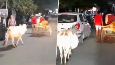 Odisha Viral Video: वेदनादायक! जखमी वासराला रुग्णालयात घेऊन जाणाऱ्या हातगाडी मागे धावत होती गाय; व्हिडिओ पाहून डोळ्यात येईल पाणी