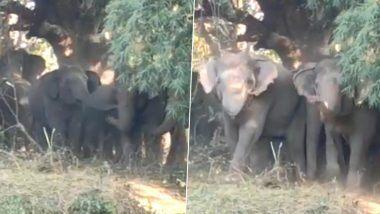 Elephants Viral Video: हत्तीच्या कळपाने एकीचे बळ दाखवत आपल्या क्षेत्रात आलेल्या लोकांना 'अशा' पद्धतीने लावले पळवून, पाहा व्हायरल व्हिडिओ