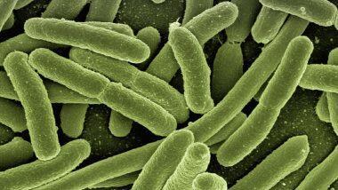 Mucormycosis: कोरोना व्हायरस सोबतच आता 'म्यूकोर्मिकोसिस' नावाच्या संसर्गयुक्त आजाराचा धोका; अहमदाबादमध्ये तब्बल 9 जणांचा मृत्यू