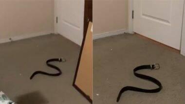 Prank With a Fake Snake: महिलेने खोट्या सापासह प्रँन्क करत आपल्या पतीला सोडले घाबरवून, व्हिडिओत पहा पुढे काय झाले