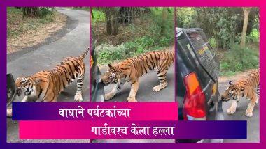 Tiger Pulls, Attacks Safari Vehicle In Bannerghatta National Park: वाघाचा पर्यटकांच्या सफारीवर हल्ला