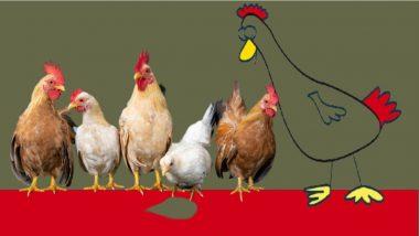 Chicken Found Dead In Maharashtra: कोंबडी मरण्याचे सत्र महाराष्ट्रात सुरुच, लातूरमध्ये 350 कोंबड्या ठार; अनेकांना सतावतोयत Bird Flu संसर्गाचा धोका