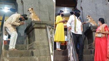 'या' मंदिराच्या बाहेर चक्क कुत्रा देतो भाविकांनाआशीर्वाद; व्हिडिओपाहून तुम्ही ही व्हाल आश्चर्यचकीत (Watch Video)