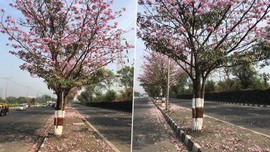 मुंबई मध्ये Eastern Express Highway बहरला  Pink Trumpet Trees ने ; पहा चेरी ब्लॉसमच्या नजार्याचे फोटो, व्हिडिओ