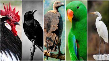 Birds Death Rate Increased in Maharashtra: आगोदर कोंबड्या आणि आता कावळे, बगळे, गिधाडे, पोपट; राज्यात पक्षांच्या मृत्यूचे प्रमाण वाढले