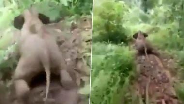 Baby Elephant Sliding Video: स्लायडिंग करताना छोट्या हत्तीचा मजेशीर व्हिडिओ व्हायरल; पाहून तुमच्याही चेहऱ्यावर खुलेल हास्य