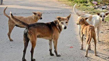 कानपूर येथे एकाचवेळी आठ कुत्र्यांचा मृत्यू, शरीरात Parvo व्हायरस आढळल्याची माहिती