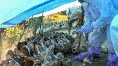 Bird Flu Update: भारतात कोरोना महामारी दरम्यान 'बर्ड फ्लू'मुळे दहशत; 'या' राज्यात अलर्ट
