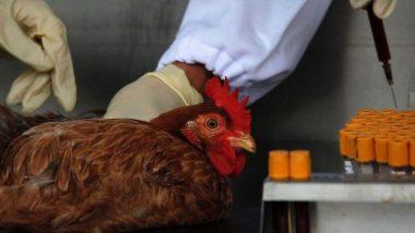 Bird Flu Alert: 'बर्ड फ्लू' चा संसर्ग टाळण्यासाठी काय करावे? अंडी-चिकन खरेदी करताना घ्या 'ही' खबरदारी